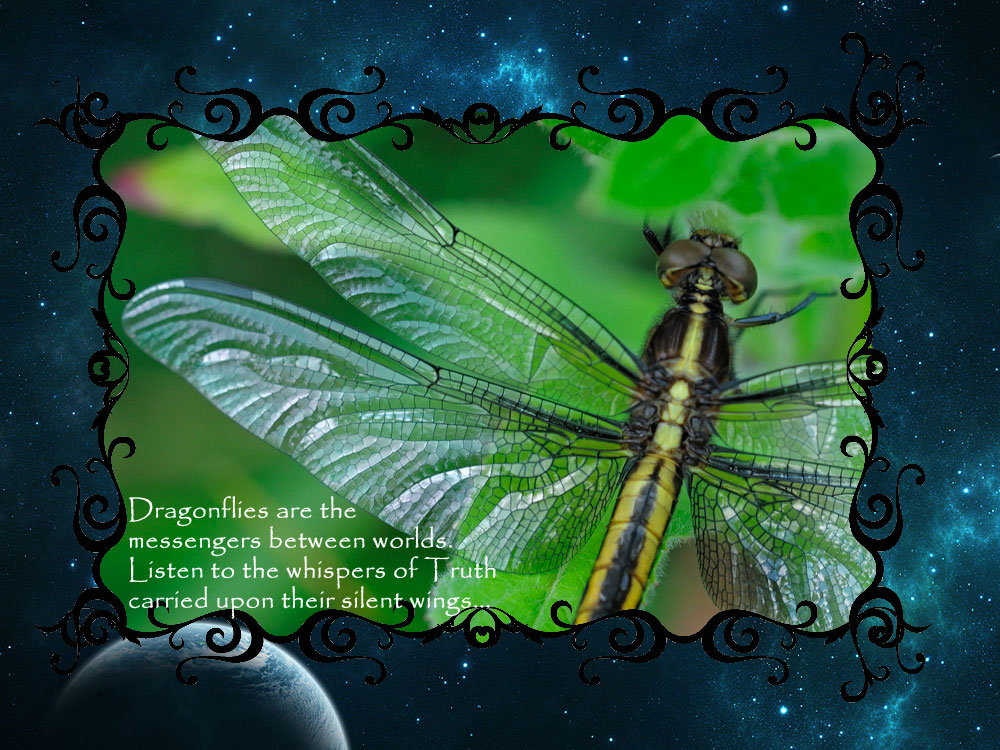 dragonfly-secrets-final